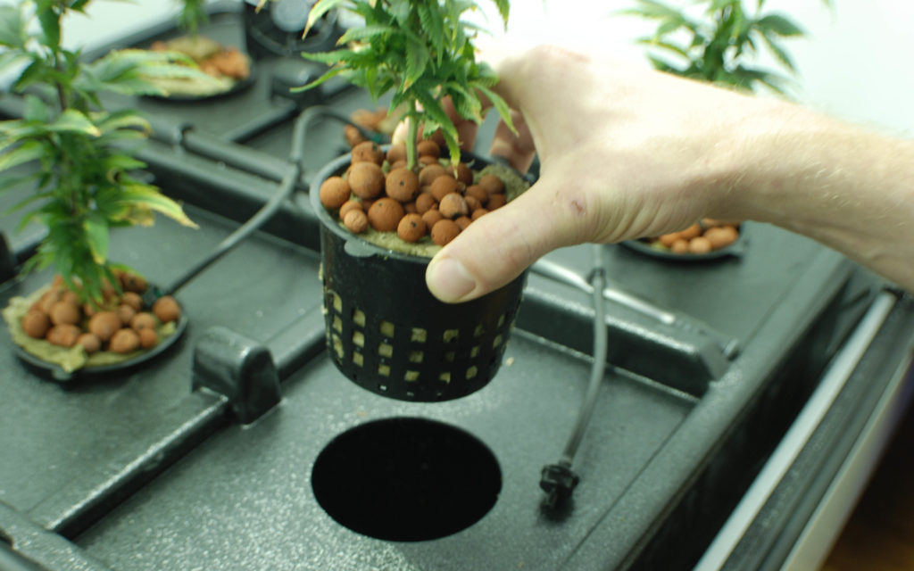 Iu0027m looking to grow and originally I was either going to purchase a tent or grow box from BC Northernlights. Unfortunately the guy going half with me is ... & Nicou0027s Nuggets: Grow Box vs. Grow Tent u2013 High Times u2013 Cannabis ...