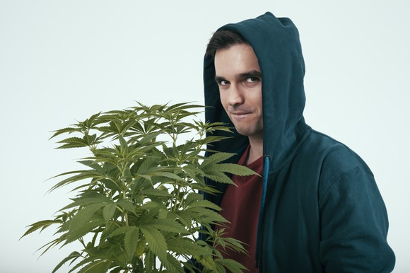 A young man in a hoodie holding a cannabis plant.