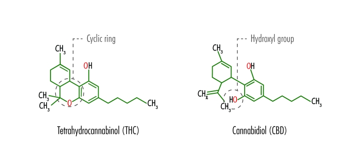 The structural formulas of Tetrahydrocannabinol (THC) and Cannabidiol (CBD) including the location of the cyclic ring in THC and the hydroxyl group in CBD.