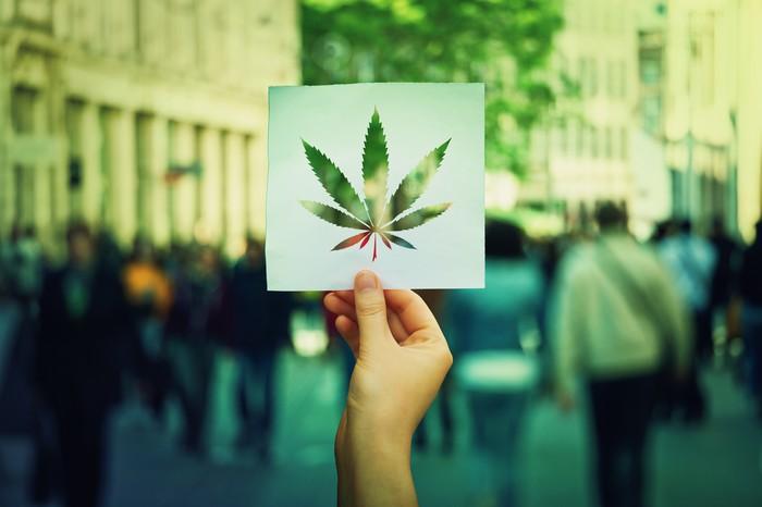 weed europe