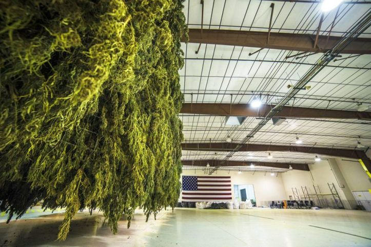 USA | Industrial Hemp Is The Answer To Petrochemical Dependency